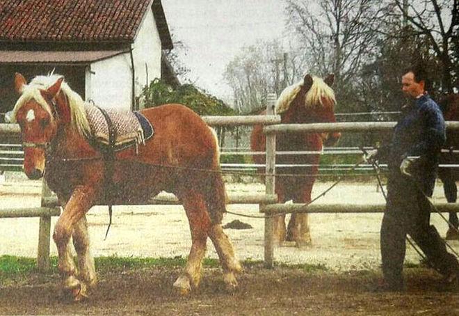 Salvare i cavalli addestrandoli al lavoro